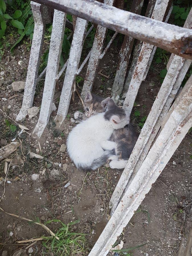 Irmão dos gatos imagens de stock