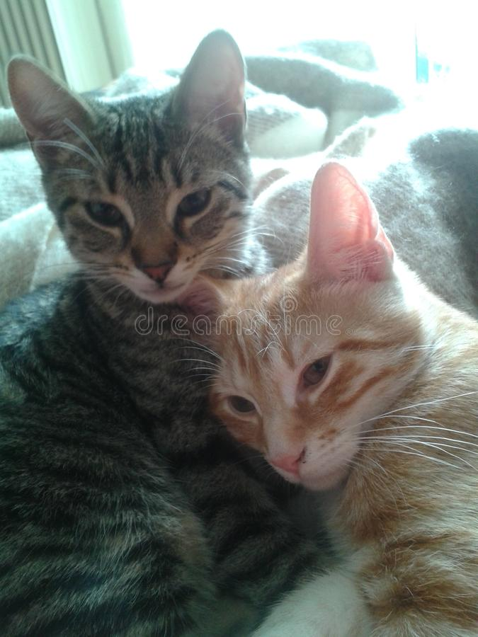 Irmãs do gato imagem de stock royalty free