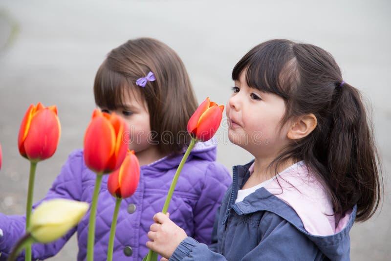Irmãs que param para cheirar tulipas da mola imagens de stock