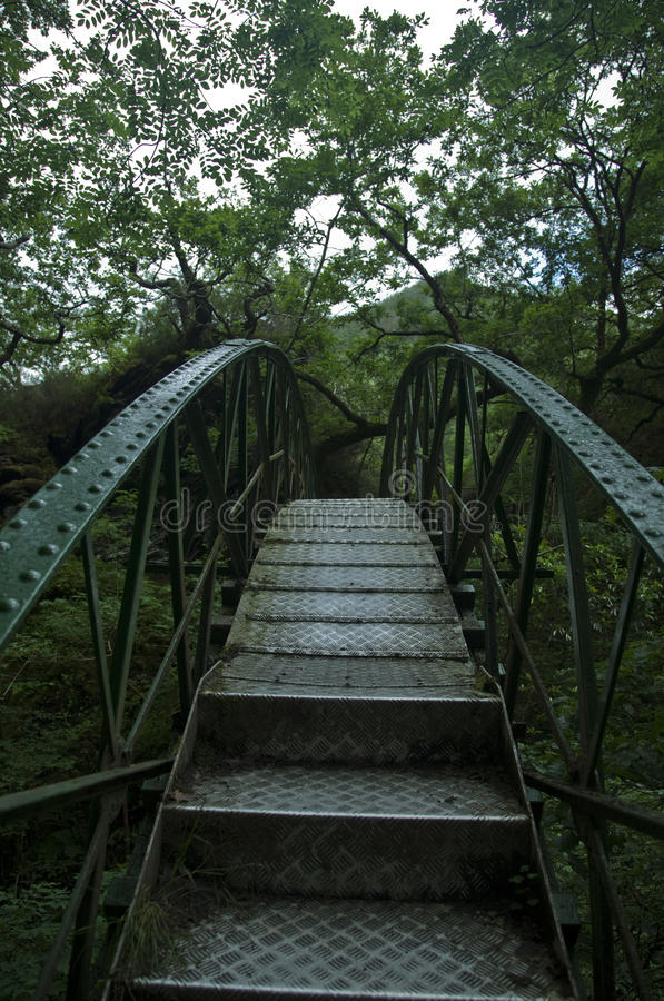Iron bridge in jungle stock images