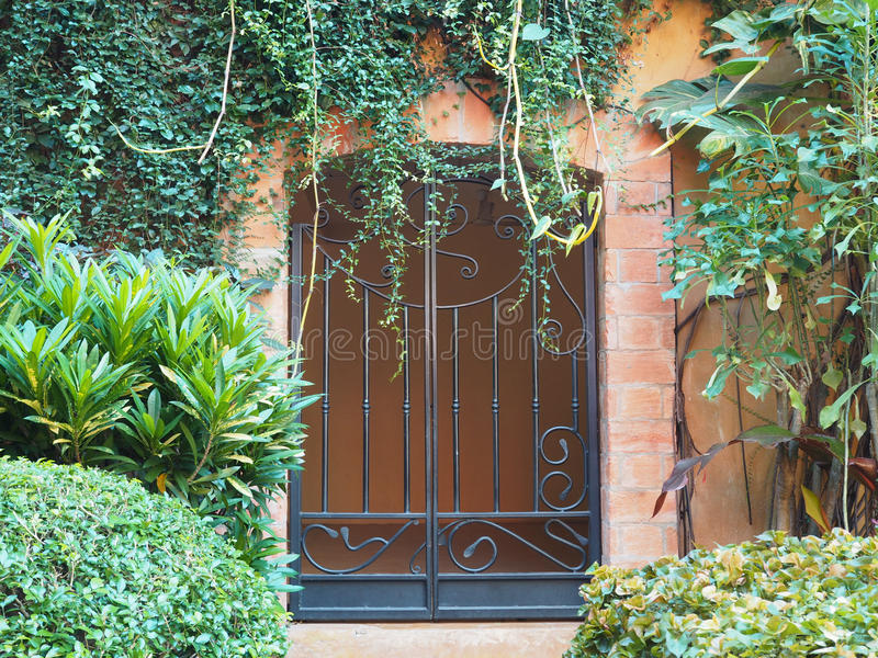 Iron door vintage style with green creeper plant. And tree stock photography