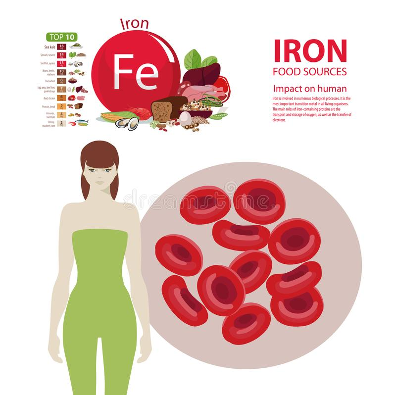 Iron. The effect of minerals on human health. A healthy diet and a healthy lifestyle. Infographics. Iron. Food sources and influence on human health. The effect royalty free illustration