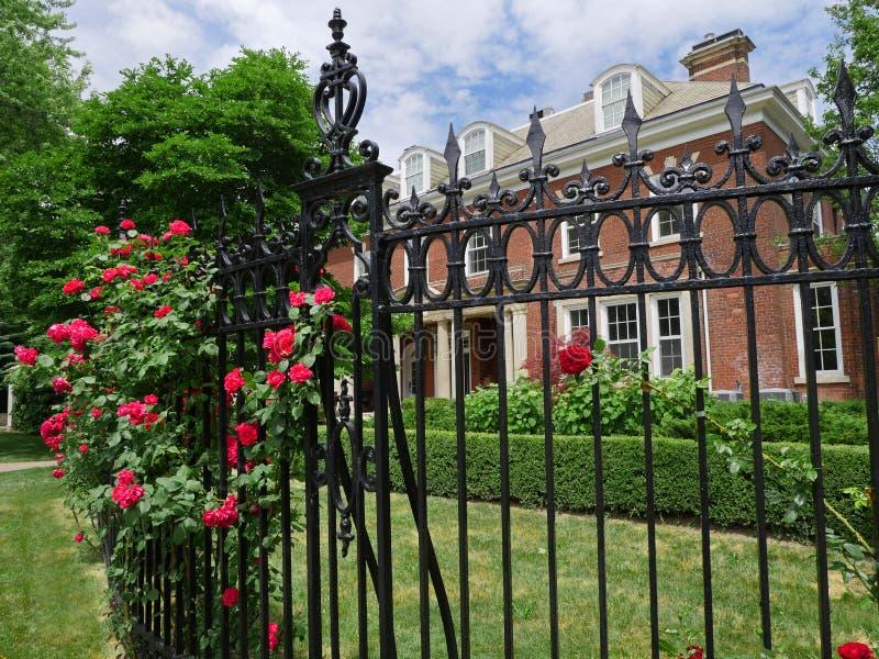 Iron fence with hedge of rose bushes stock image