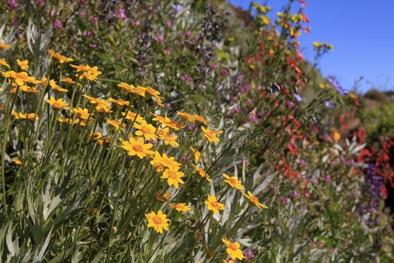 Iron Mountain-Wildflowers stockfoto
