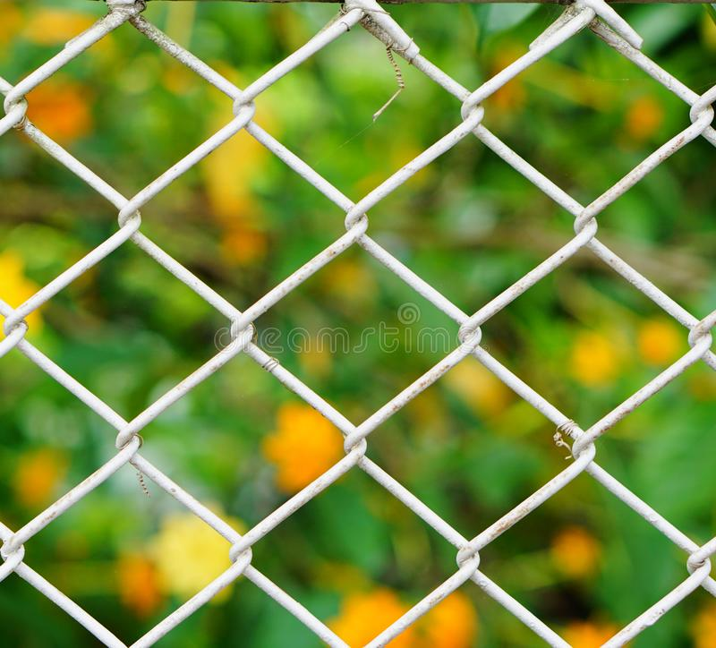 Iron net. Surrounded yellow flower garden stock photos