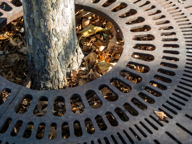 Iron tree grate royalty free stock photography