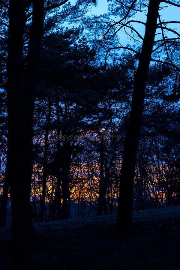 Irrealny, fantastyczny pomarańcze zmierzch w drzewach w lesie, góry kislovodsk Russia obraz royalty free
