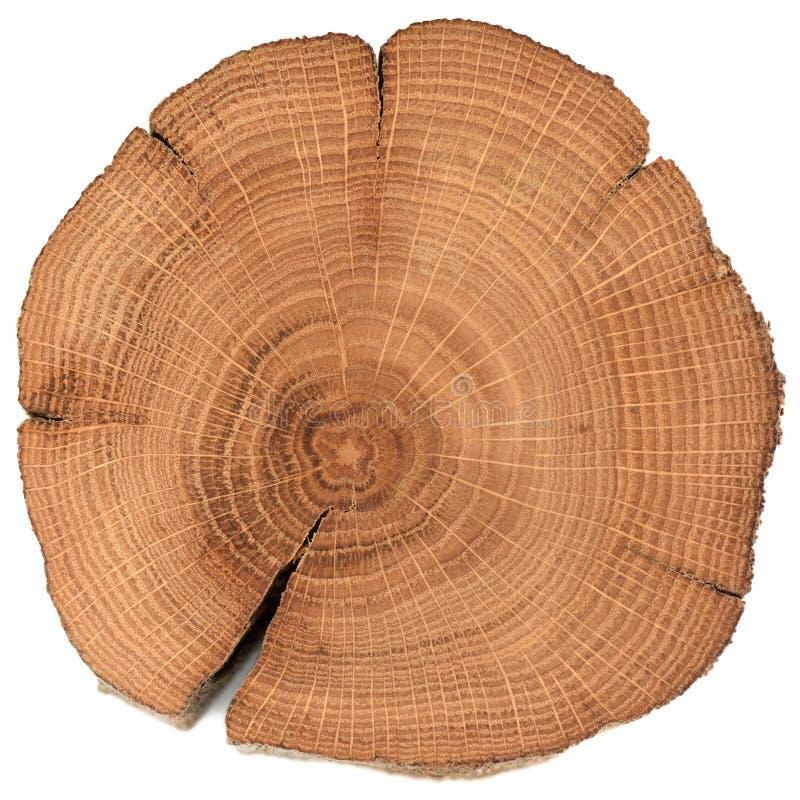 Irregular shaped oak wood slab with growth rings and cracks isolated on white background royalty free stock image