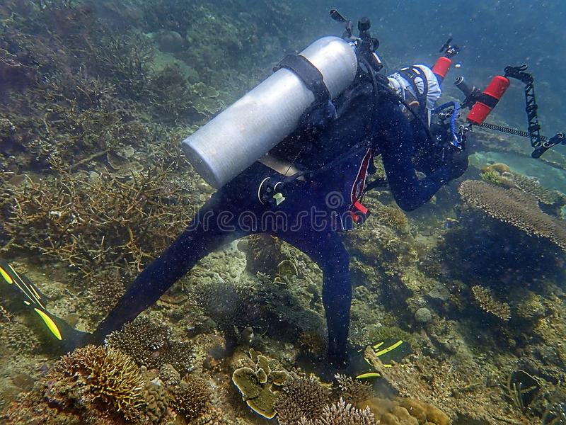 Irresponsibility underwater photographer whom step on the coral reefs during a leisure dive in Tunku Abdul Rahman Park, Sabah. Irresponsibility underwater royalty free stock photo