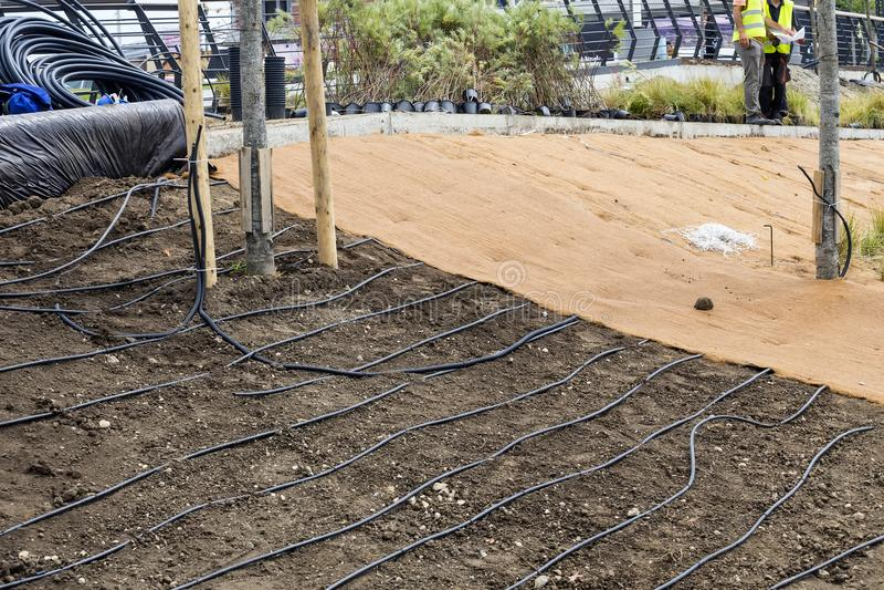 Irrigação de gotejamento subsuperficial para plantas imagem de stock royalty free