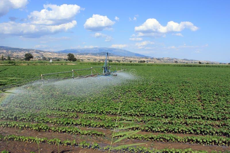 Irrigação do campo imagens de stock royalty free