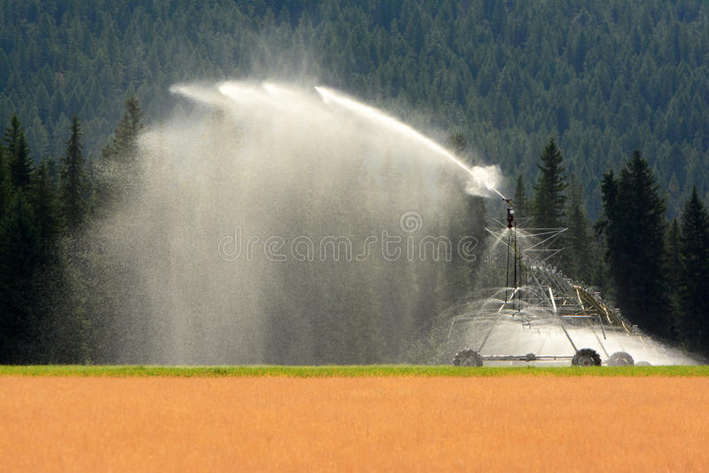 Irrigação do campo, cânone da água imagens de stock