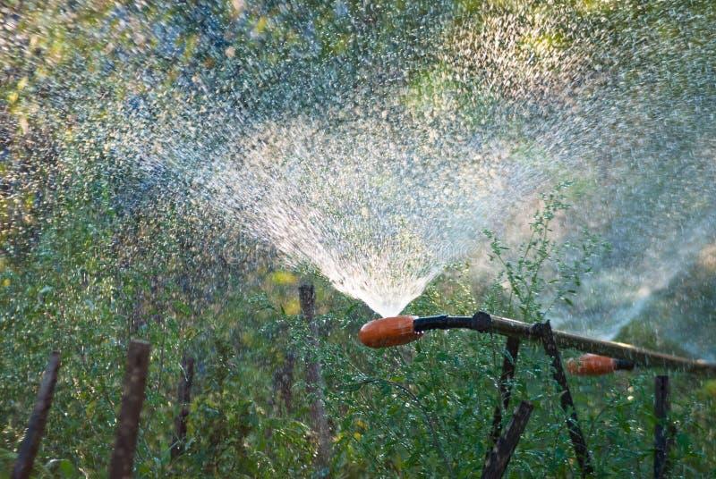 Irrigaci?n de la regi?n agr?cola, plantaciones de riego en tiempo seco fotos de archivo libres de regalías