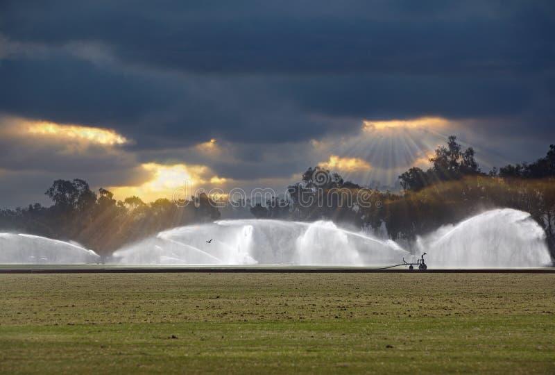 Irrigación de un campo del polo de la hierba verde, irrigación foto de archivo