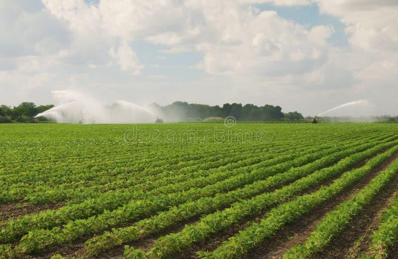 Irrigación del campo imagenes de archivo