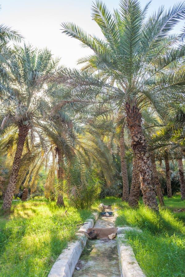Irrigación en Jimi Oasis en Al Ain, UAE fotografía de archivo