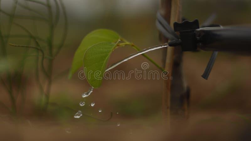 Irrigación por goteo Corriente de un golpecito a un árbol joven fotografía de archivo