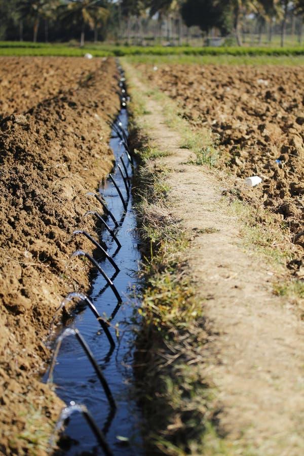 Irrigación por goteo en una granja imágenes de archivo libres de regalías