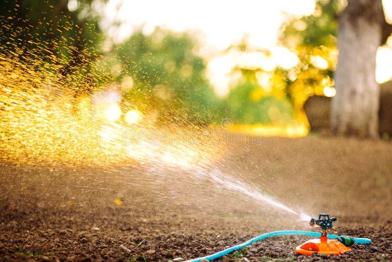Irrigaci?n del jard?n Sistema de rociadores con la manguera que riega la hierba en el jardín fotografía de archivo libre de regalías