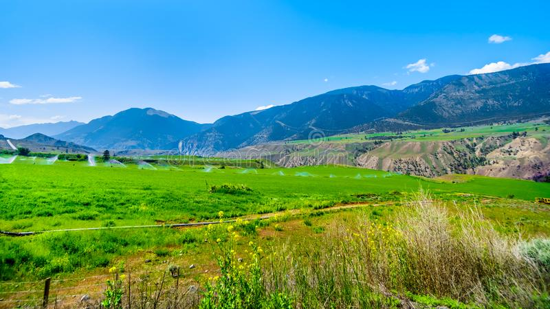 Irrigated fertile farmland along the Fraser River as it flows through the canyon to the town of Lillooet in the Chilcotin region stock image