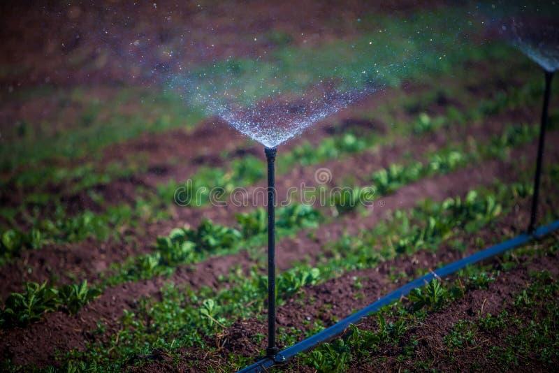 Irrigatie stock foto