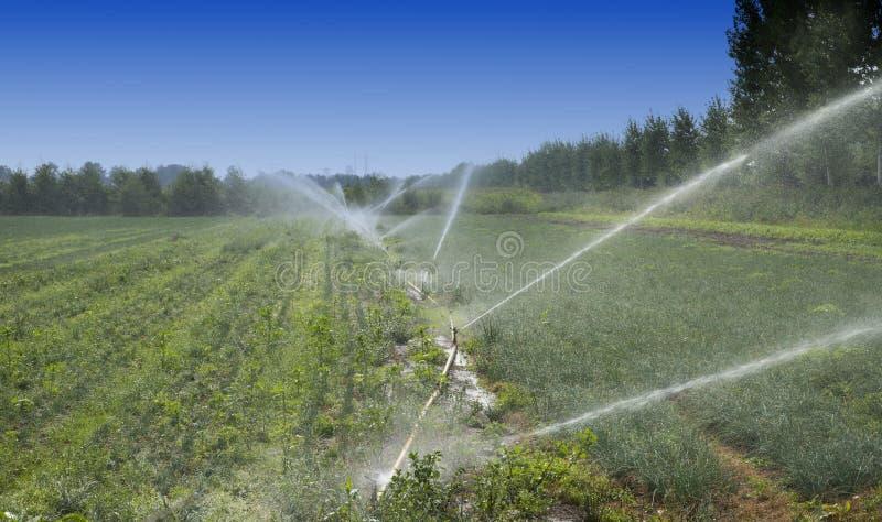 Irrigatie royalty-vrije stock afbeeldingen