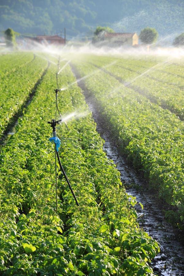 Irrigatie op landbouwbedrijfgebied stock afbeeldingen