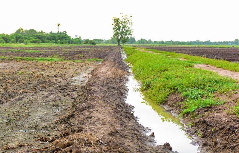 Irrigatiekanaal in een landelijk tropisch padieveld royalty-vrije stock foto's