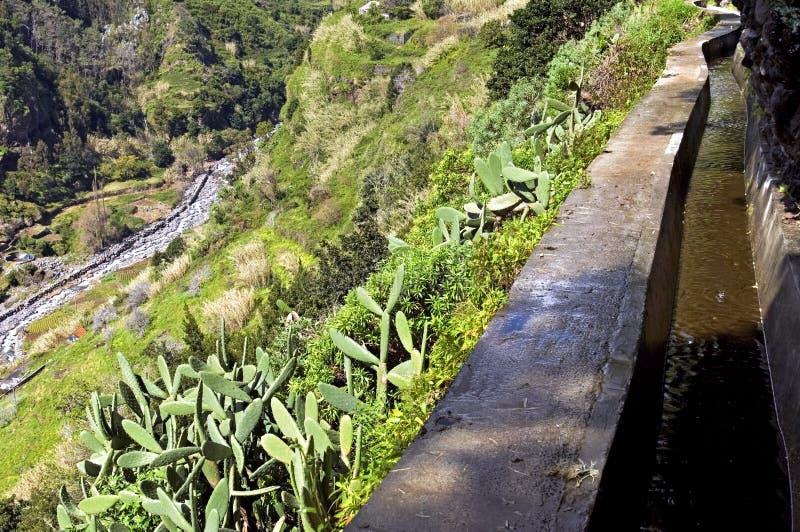 Irrigatiekanaal en tropische Cactussen in Madera stock afbeeldingen