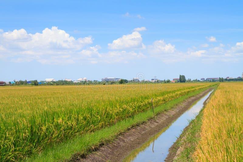 Irrigatiekanaal in padieveld stock foto