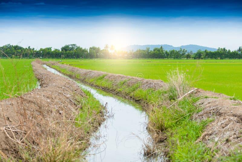 Irrigatiekanaal, waterweg in padieveld royalty-vrije stock fotografie