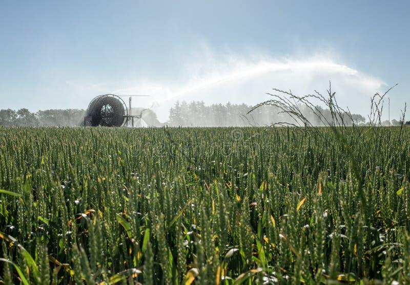 Irrigatiespil die de Gebieden water geven royalty-vrije stock afbeeldingen