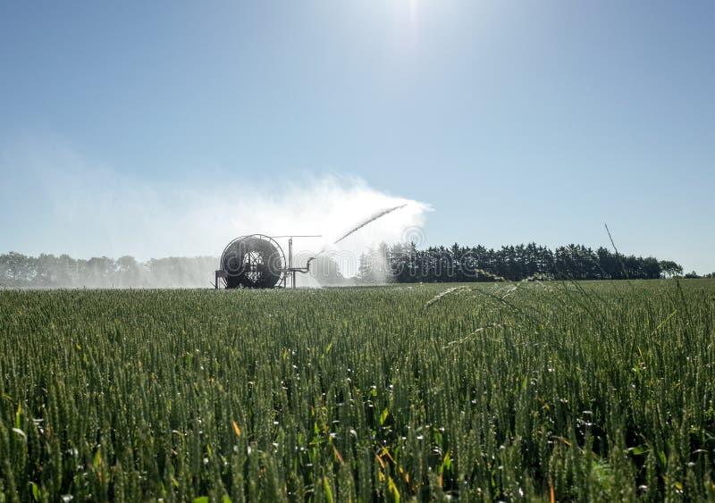 Irrigatiespil die de Gebieden water geven stock foto