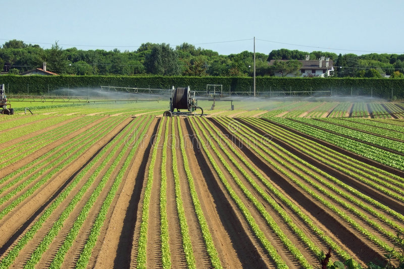 Download Irrigating Royalty Free Stock Photography - Image: 2823507