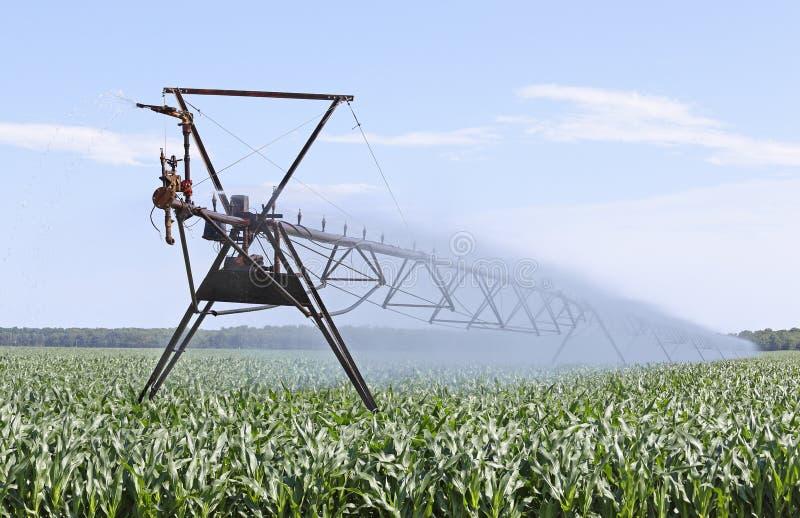 Irrigating Corn. Farm irrigation equipment watering a corn plants royalty free stock photography