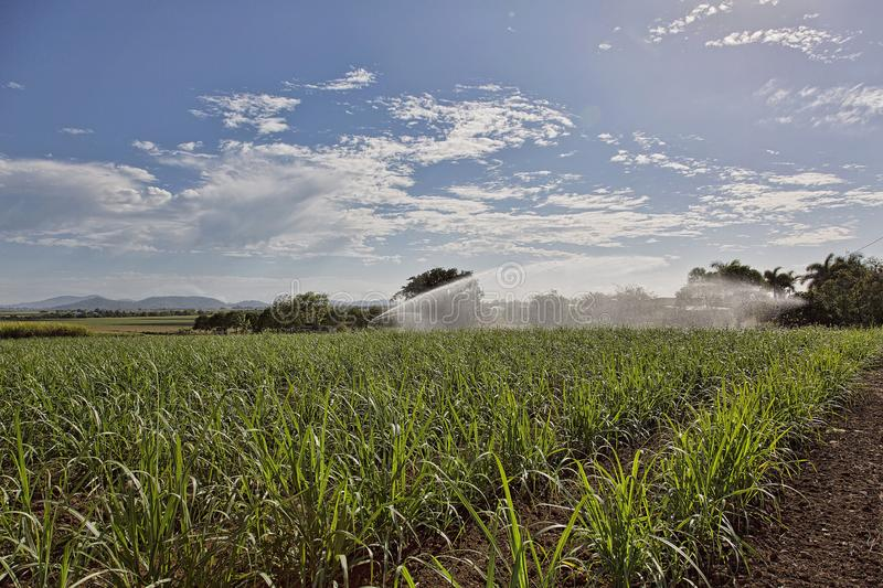 Irrigating A Sugar Cane Crop In Australia stock images