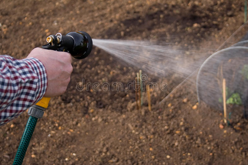 Irrigating the vegetables stock photos