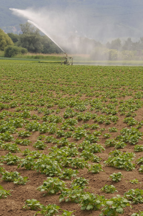 Irrigation images stock