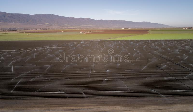 Irrigation Agriculture Field in California, United States. Sprinkler system waters rows of lettuce crops on farmland in the Salinas Valley royalty free stock image