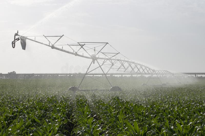 Irrigation of corn field. Landscape view of a center pivot system irrigation system working on a corn field royalty free stock image