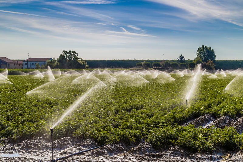 Irrigation of cultivated fields in the countryside in the north royalty free stock image