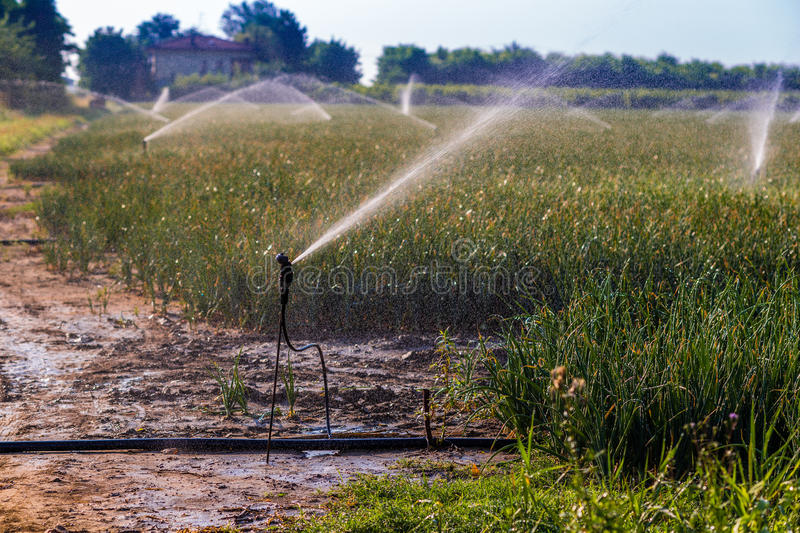 Irrigation of cultivated fields stock images
