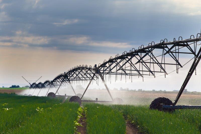 Irrigation de champ d'oignon photographie stock