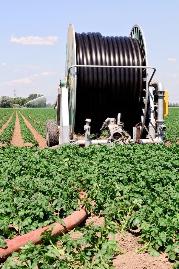 Download Irrigation farmland stock photo. Image of irrigation - 20072768