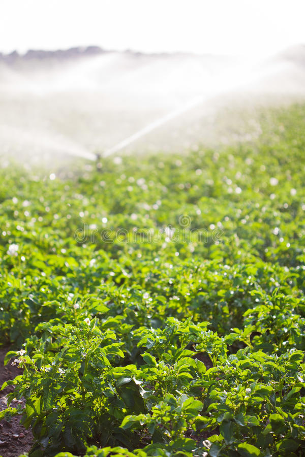 Download Irrigation In Field Selective Focus Stock Image - Image: 32613715
