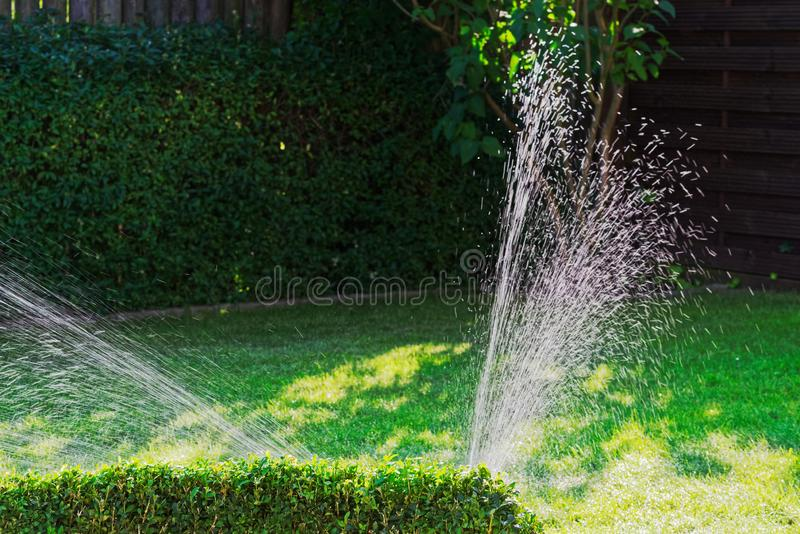 Irrigation of green lawn in a garden on sunny day royalty free stock photography