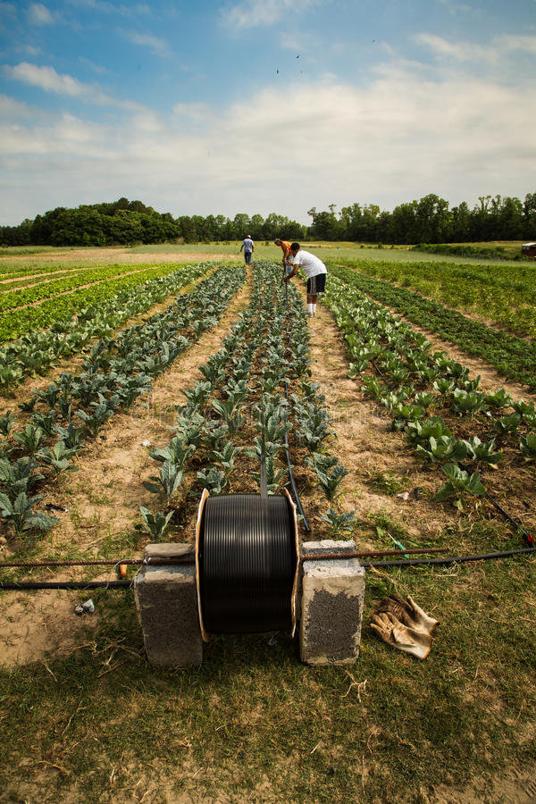 Irrigation organique image stock
