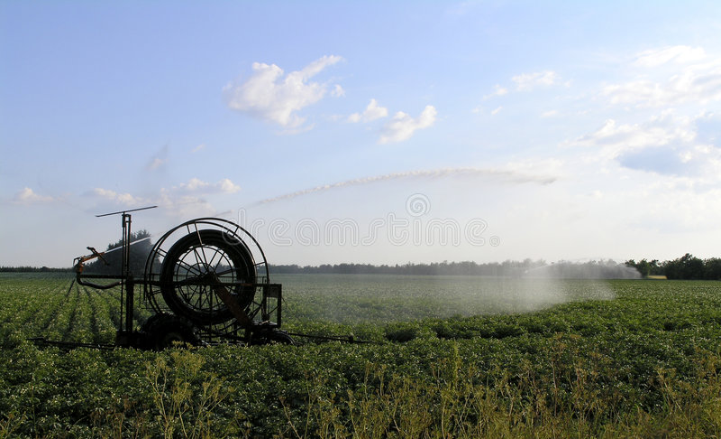 Irrigation of potatoes stock image
