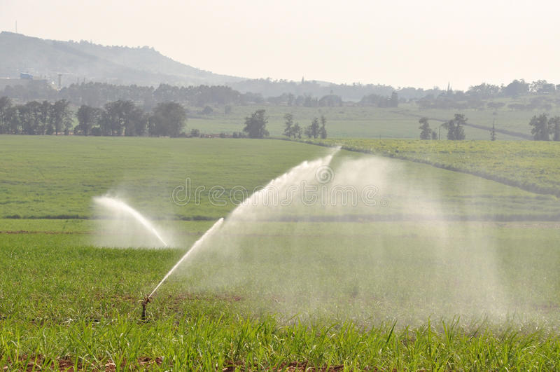 IRRIGATION. SPRINKLER IRRIGATION SYSTEM ON A SUGARCANE FARM stock photography