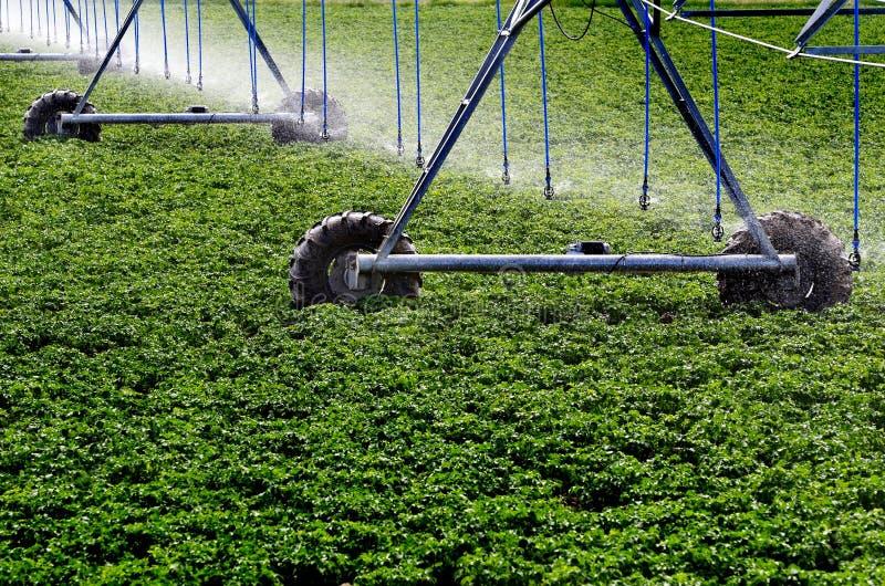 Irrigation Sprinkler System for Agricultural Farm Farming Crops stock images